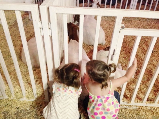 081913 Petting Goats