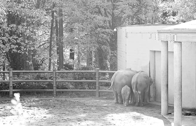 Zoo1 PP