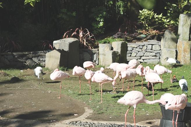 Zoo8 PP